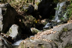 todtnauwasserfall-10